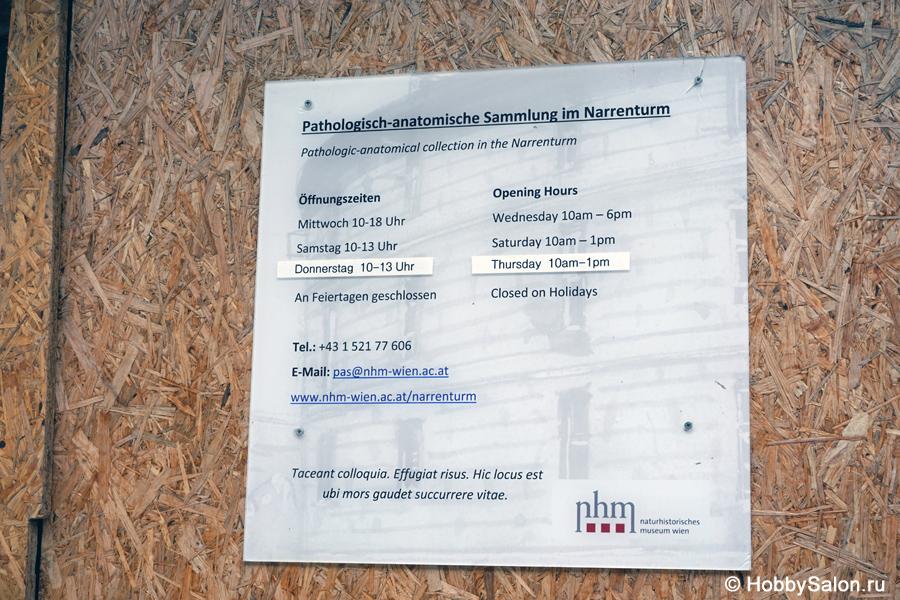 Groß Pathologische Anatomie Museum New York Galerie - Anatomie Von ...